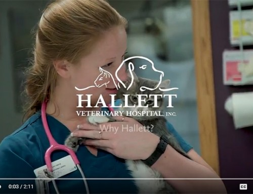 Hallett Vet Educational Videos